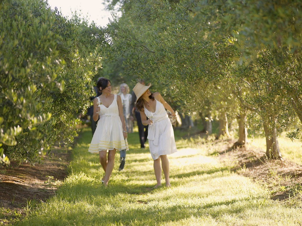 girls in the olive grove